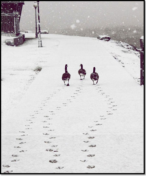 canard-neige-hiver-animaux