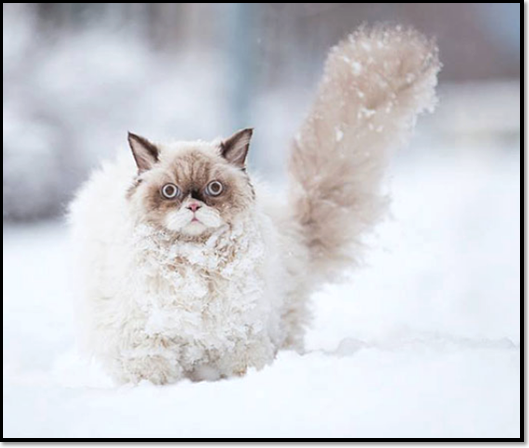 chat-neige-montagne-hiver