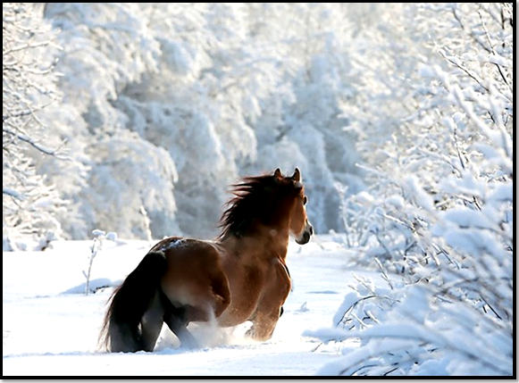 cheval-neige-hiver-animaux