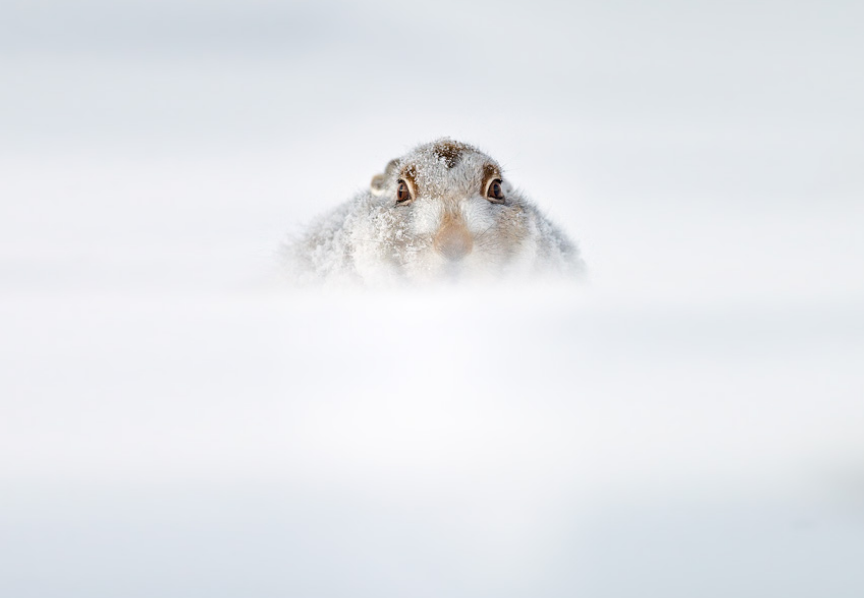 lapin neige insolite hiver
